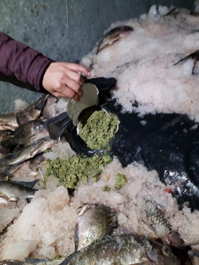 Entre pescados estaba la marihuana