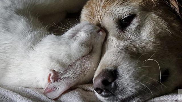 mascotas geriátricos