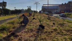 Laureles Reforestación La Piedad