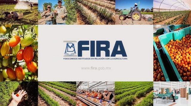 coberturas FIRA
