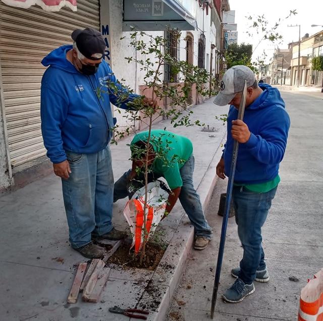 árboles Hidalgo La Piedad 1