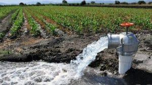 producción agrícola UNAM 1