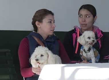 esterilización canina La Piedad