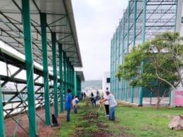 Unidad Bicentenario Reforestación La Piedad 1