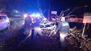 Tránsito Policía árboles caídos