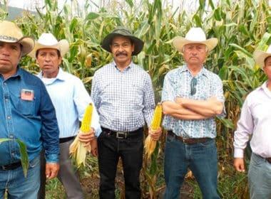 CAMPO Michoacán PIB