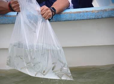 pez blanco Chapala